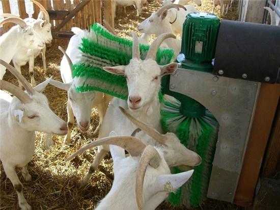 Шурр щетки для коз